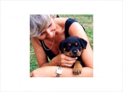 Rottweiler Puppies Need Good Homes