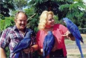 Talking Female Hyacinth Macaw Parrot1